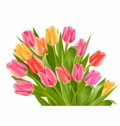 bouquet of tulip flowers vector image