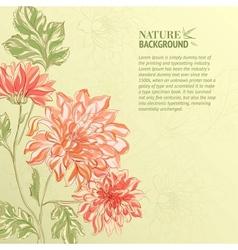Branch of Chrysanthemum vector image