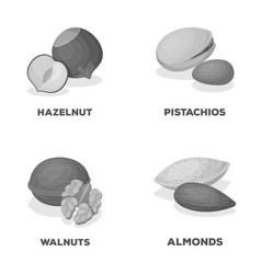 Hazelnut pistachios walnut almondsdifferent vector
