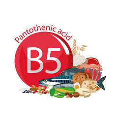Vitamin b5 pantothenic acid vector