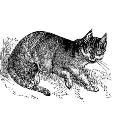 Wild cat old engraving vector image