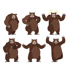 Bear set on white background Grizzly various poses vector