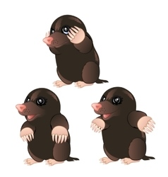 Mole animal character with different emotions vector