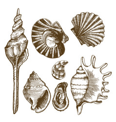 Sea set with seashells mussels and mollusks vector