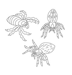 set of black and white spiders for coloring vector image