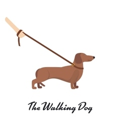 Light Brown Dachshund with a leash vector image