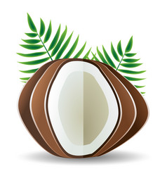 Coconut palm leaves vector