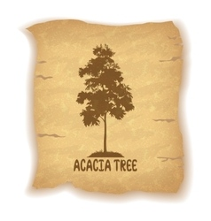 Acacia Tree on Old Paper vector