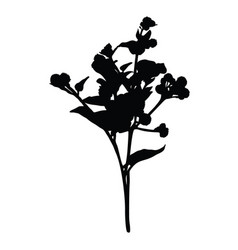 burdock silhouette isolated on white background vector image