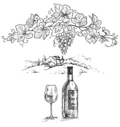 hand drawn grape branch and wine bottle vector image