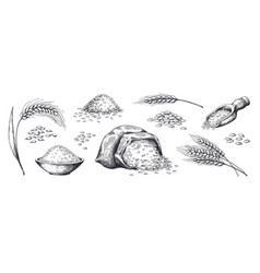hand drawn wheat grains plants in bag and cereal vector image