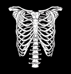 Human ribcage hand drawn line art print vector