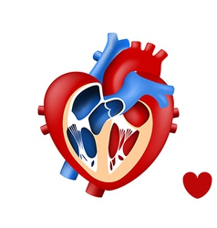 Design love human heart in and out vector