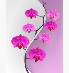 branch flowers of the orchid pink vector image
