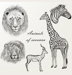 set hand drawn detailed african animals vector image