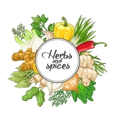 vegetable round design with spices vector image