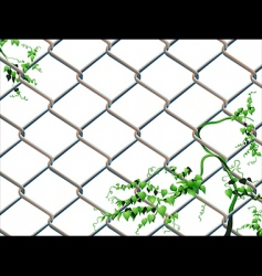 barbed wire with ivy vector image