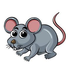 little rat on white background vector image