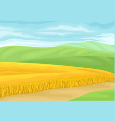field ripe wheat on white vector image