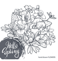 hello spring text hand lettering with hand drawn vector image