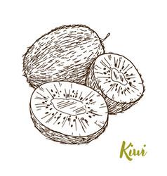 kiwi hand drawn sketch vector image