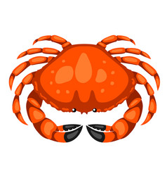 Red crab isolated seafood on vector