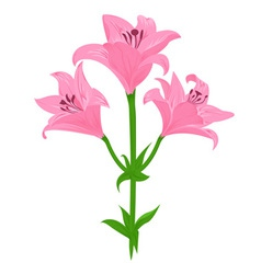 lily color vector image vector image