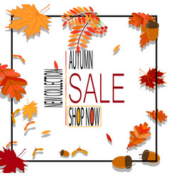 bright banner for autumn sale with autumn leaves vector image