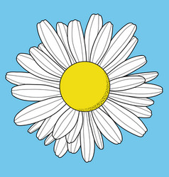 chamomile flower isolated on blue background vector image