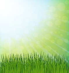 Spring green grass and sun rays vector image