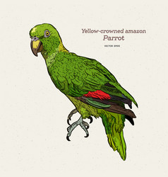 yelloe crowned amazon parrot hand draw sketch vector image