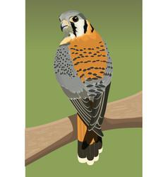 American krestel type bird vector
