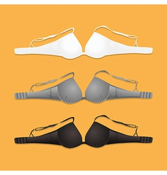 colorful bras vector image