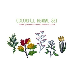 colorful hand painted herbal set vector image