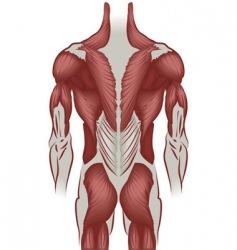 Human back vector