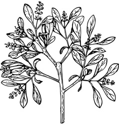 plant loranthus vector image