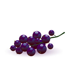ripe blackcurrant vector image