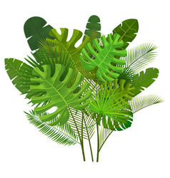 tropical leaves composition vector image