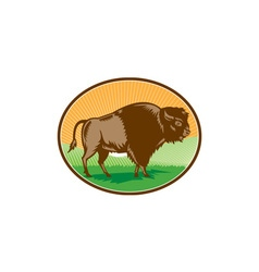 American bison oval woodcut vector
