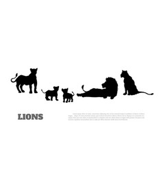 Black silhouette lion pride vector