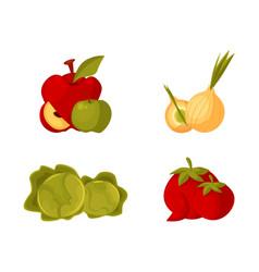 Farm products - apple bulb onion cabbage tomato vector