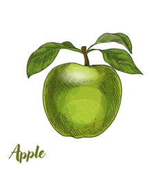 Green apple with leaves vector
