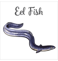 Live eel fish isolated on white background vector image