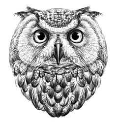 owl sketch drawn graphic portrait vector image