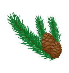 pine branch with cones on a white background vector image
