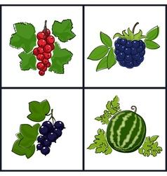 RedcurrantBlackcurrantWatermelonBlackberry vector