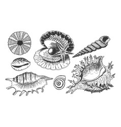 tropical shells underwater icon set vector image