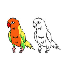 colorful parrot vector image