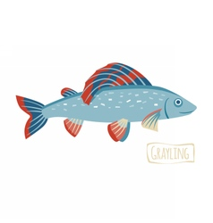 Grayling cartoon vector image vector image