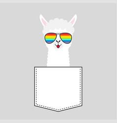 alpaca llama face head in pocket rainbow vector image